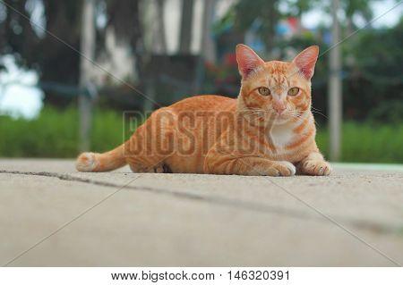 Orange Cat In The Park