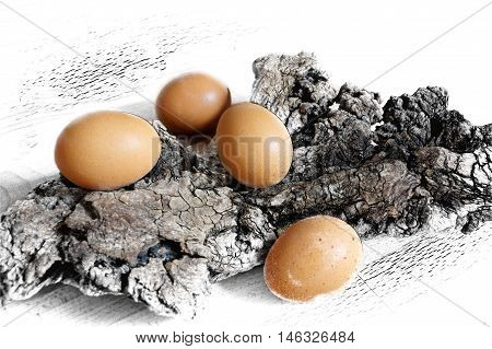 Easter brown eggs on wood driftwood. Abstract still life.