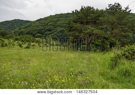 Panorama of glade and  green  forest, Vitosha mountain, Bulgaria