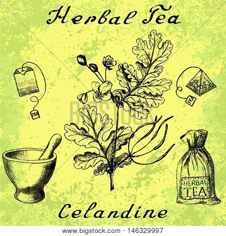 Greater celandine hand drawn botanical illustration. Vector drawing. Herbal tea elements - tea bag bag mortar and pestle. Medical herbs. Lettering in English languages. Grunge background