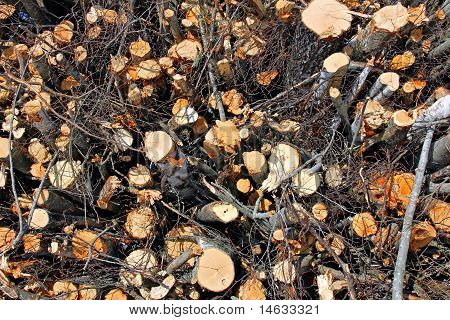 Biomass Wood Background