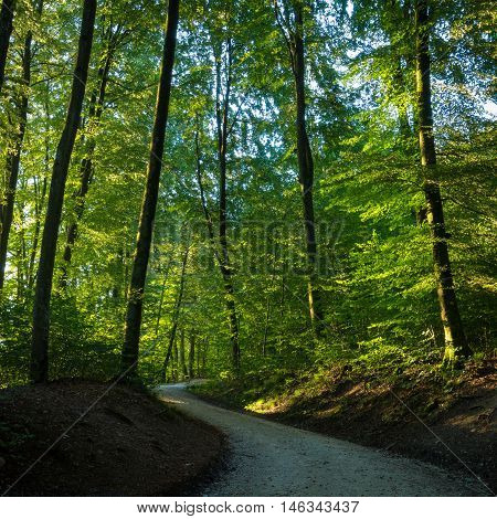 Winding Trail Through A Sunlit Forest