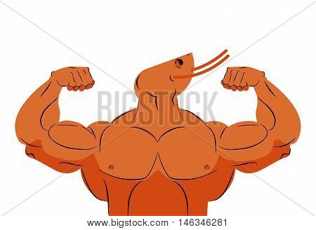 Strong Athlete Shrimp. Fitness Marine Animal Athlete With Huge Muscles. Bodybuilder Plankton. Sports