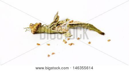 picture of a dry okra isolated on the white backgroud.