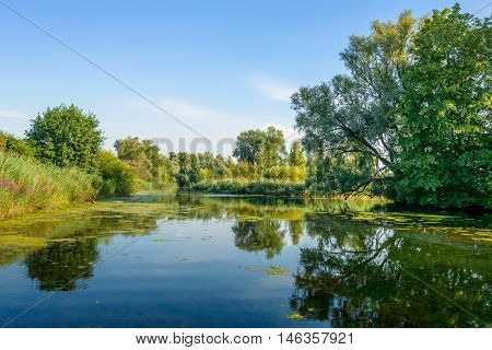 Colorful landscape with shrubs and trees reflected in the mirror smooth water surface of a natural pond in summertime.