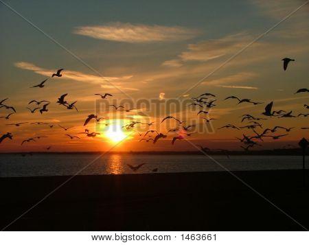 Sunsetfullofseagulls