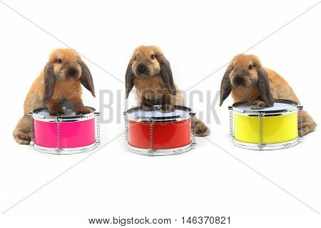 tree rabbits sitting on a drum isolated on white, studio shot
