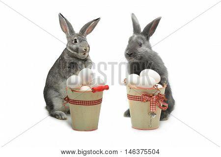grey rabbit near a bucket with easter eggs