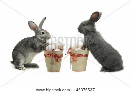 grey rabbits near a bucket with easter eggs