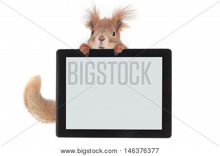 Black tablet similar in paws of a squirrel