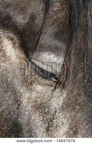 Silver Horse Portrait
