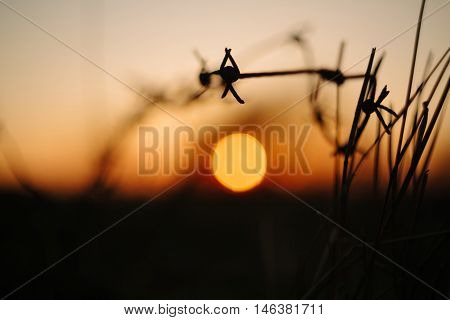 barbed wire on sunset sky background .