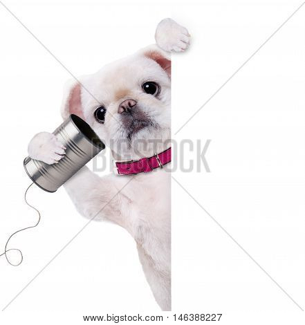 Dog on the phone with a can. Isolated on the white.