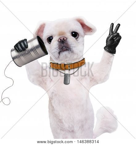 Dog on the phone with a can. Dog with peace fingers in black leather. Isolated on the white.