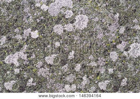 Lichens overgrown stone surface for background .