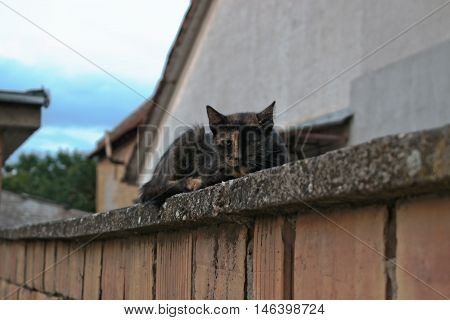 A stray cat lying on a wall looking at the camera