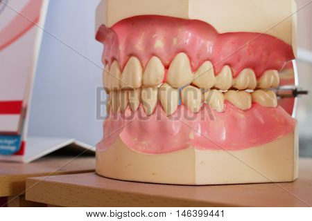 Dental Model of Teeth On a wooden table :Close upselect focus front with shallow depth of field.