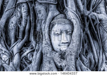 Lowkey photo of Head of Sandstone Buddha in tree root at Wat Mahathat Temple Ayutthaya on of landmark in Thailand