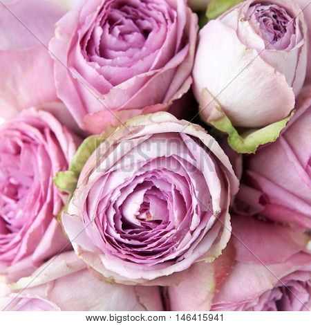 Vintage pink roses flowers background. Overhead view.