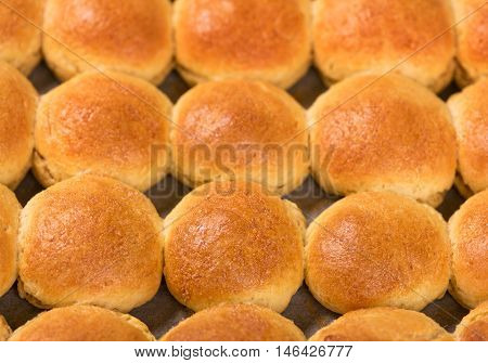 Tasty barmy rolls with stuffing over the oven tray background