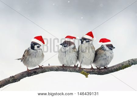 funny Christmas birds with little red hats during a snowfall