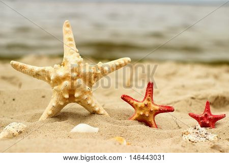 Three sea stars in yellow and red color close-up of different sizes lie on the yellow sand on sea background.