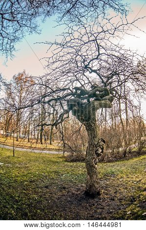 Beautiful tree whose branches are interwoven against the sky. Russia. Saint Petersburg