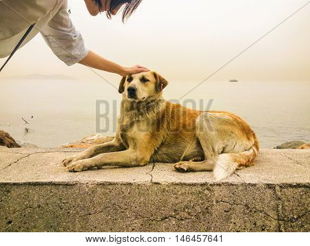 Young Woman Caressing Dog's Head  Near the Sea