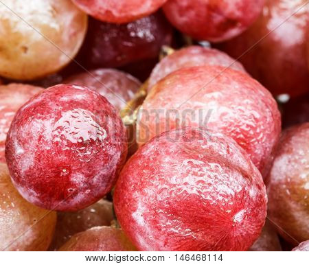 The Closer-up skin of red grapes, agriculture