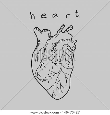 Heart doodle hand drawn isolated vector illustration