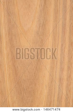 Wood texture close-up. Tasmanian oak crown cut.