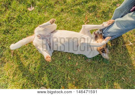 Stray Dog Playing With a Man in a Park
