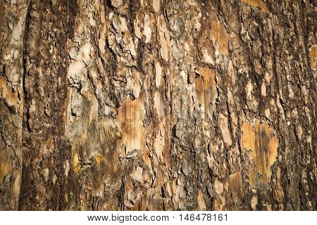 The surface of the bark of a tree close-up as a background.