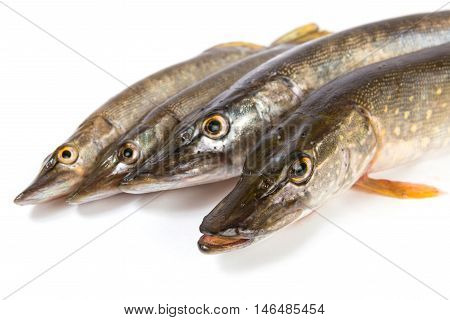 Raw fish. Pike isolated on white background.