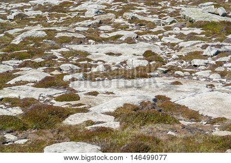 coastal vegetation detail around Pointe du Raz a promontory in Brittany France
