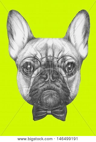 Original drawing of French Bulldog with glasses and bow tie. Isolated  on  colored background.