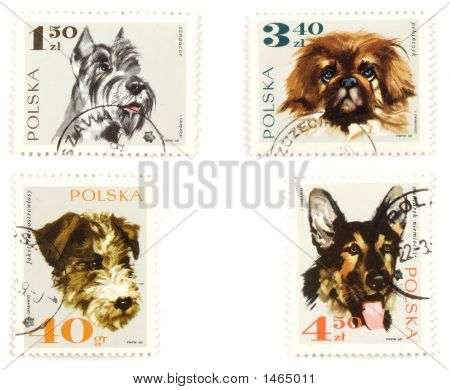 Dogs On Polish Postage Stamps