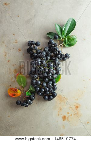 Aronia, commonly known as the chokeberry, with leaves