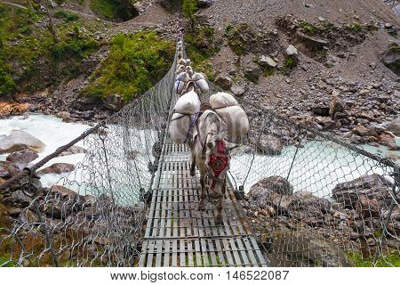 Caravan Animal Donkeys Loaded Bags Crossing Cable Bridge. Trekking Landscape View Background. Fast Mountain River Under Bridgework.Horizontal Photo