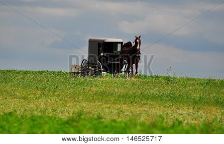 Lancaster County Pennsylvania - JUne 6 2015: Amish buggy pulled by a prancing horse rides along a country lane *