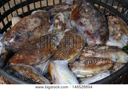 Very large freshly caught squid in a basket in the city of Qingdao China in Shandong province.