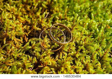 Two gold wedding rings lying on green moss