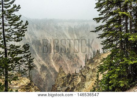 Grand Canyon of the Yellowstone during snowfall blizzard with pine trees
