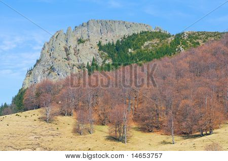 Stone Cliff With Brown Forest