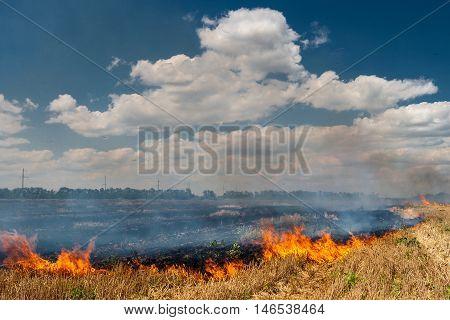 Fire burns stubble on the field destroy summer.