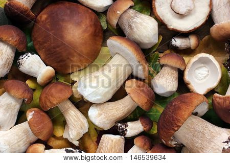 Ceps (mushrooms) and autumn leaves top view. Mushroom background.