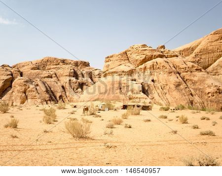 A camel and a bedouin tent in the desert.