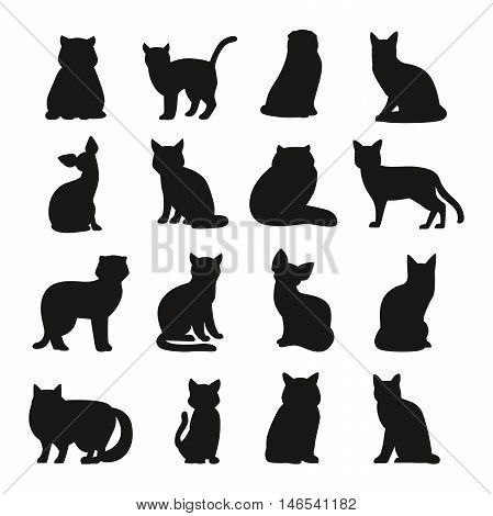 poster of Cat breeds cute pet animal set vector illustration. Cat breed animal and cartoon different cats. Mammal character human friend cat breed animals icons. Character cat portrait friend feline.