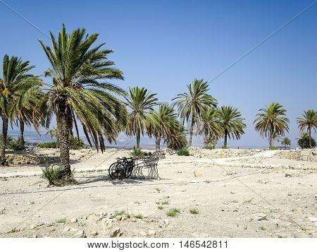 Date palms amid the ruins of Megido.