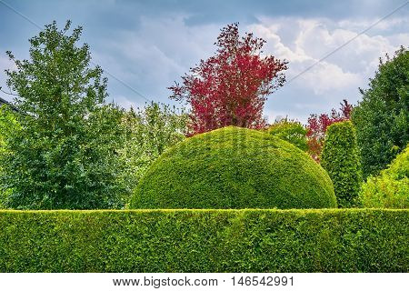 Round Shape Green Bush behind the Hedgerow